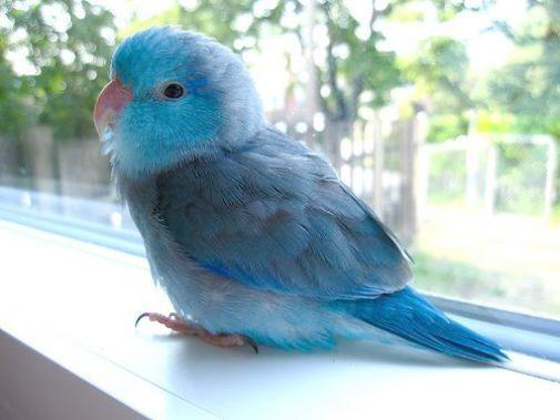 Pet Birds In India Pet S Gallery
