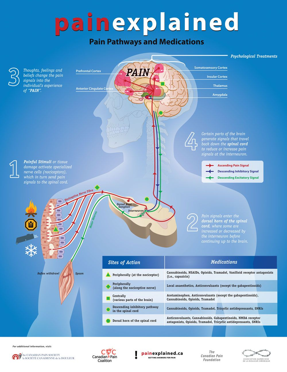 pain pathway diagram   Pain is a diagnostic signal, which