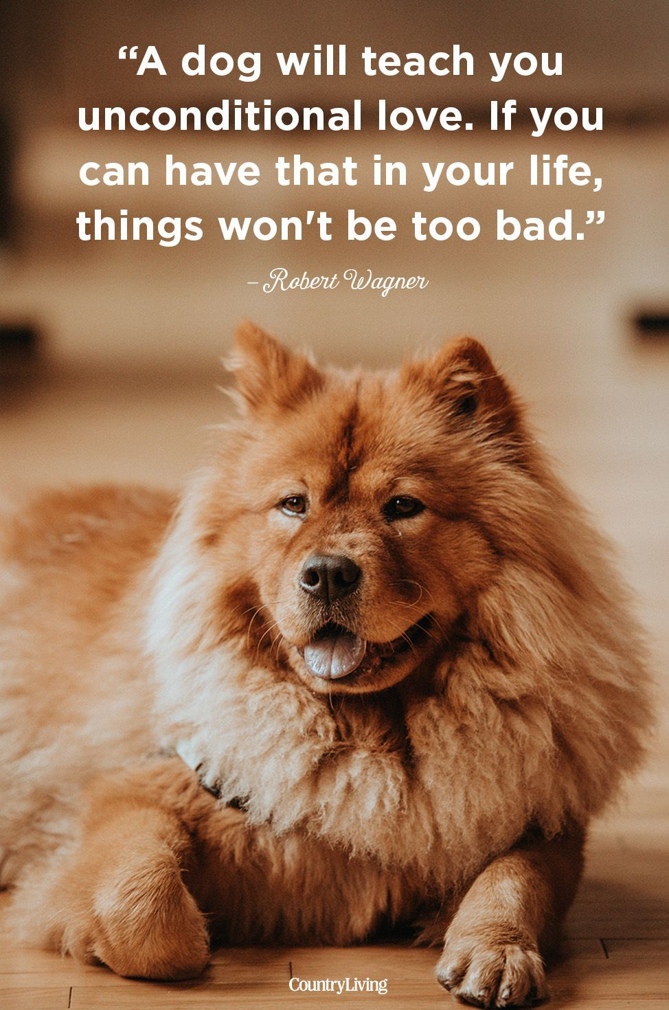 40 Dog Quotes That Will Make Your Heart