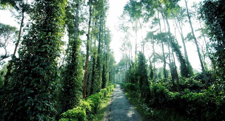 Pin on Tata Coffee Plantation Trails