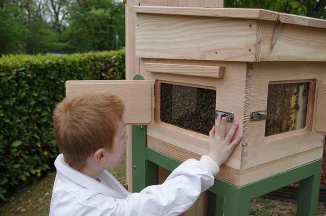 Bee-Pass®, une nouvelle ruche conçue pour observer les abeilles sans