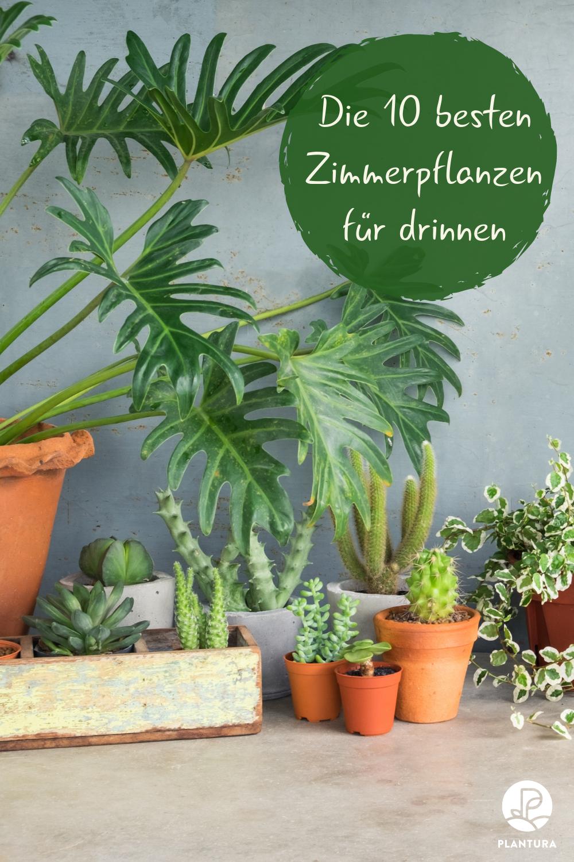 Die 10 besten Pflanzen für drinnen | Pflanzen, Pflegeleichte ...