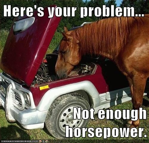 Untitled Horse Quotes Funny Funny Horse Memes Funny Horse Pictures