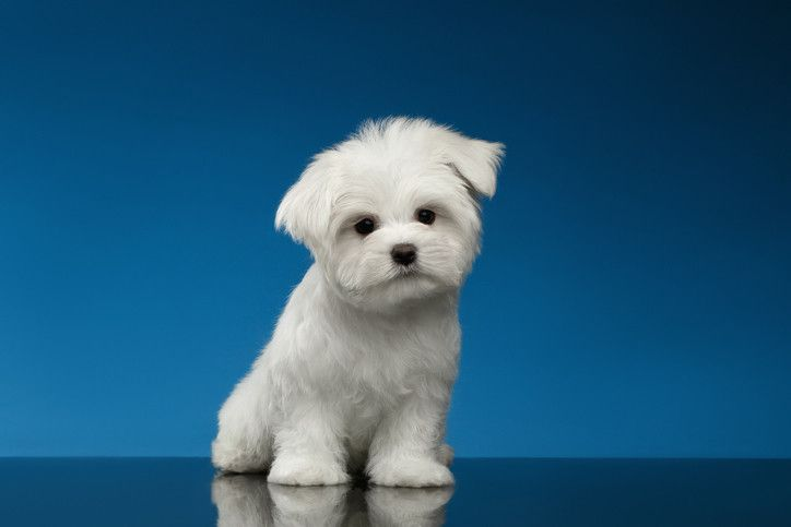 Dog names for food lovers with images dogs training