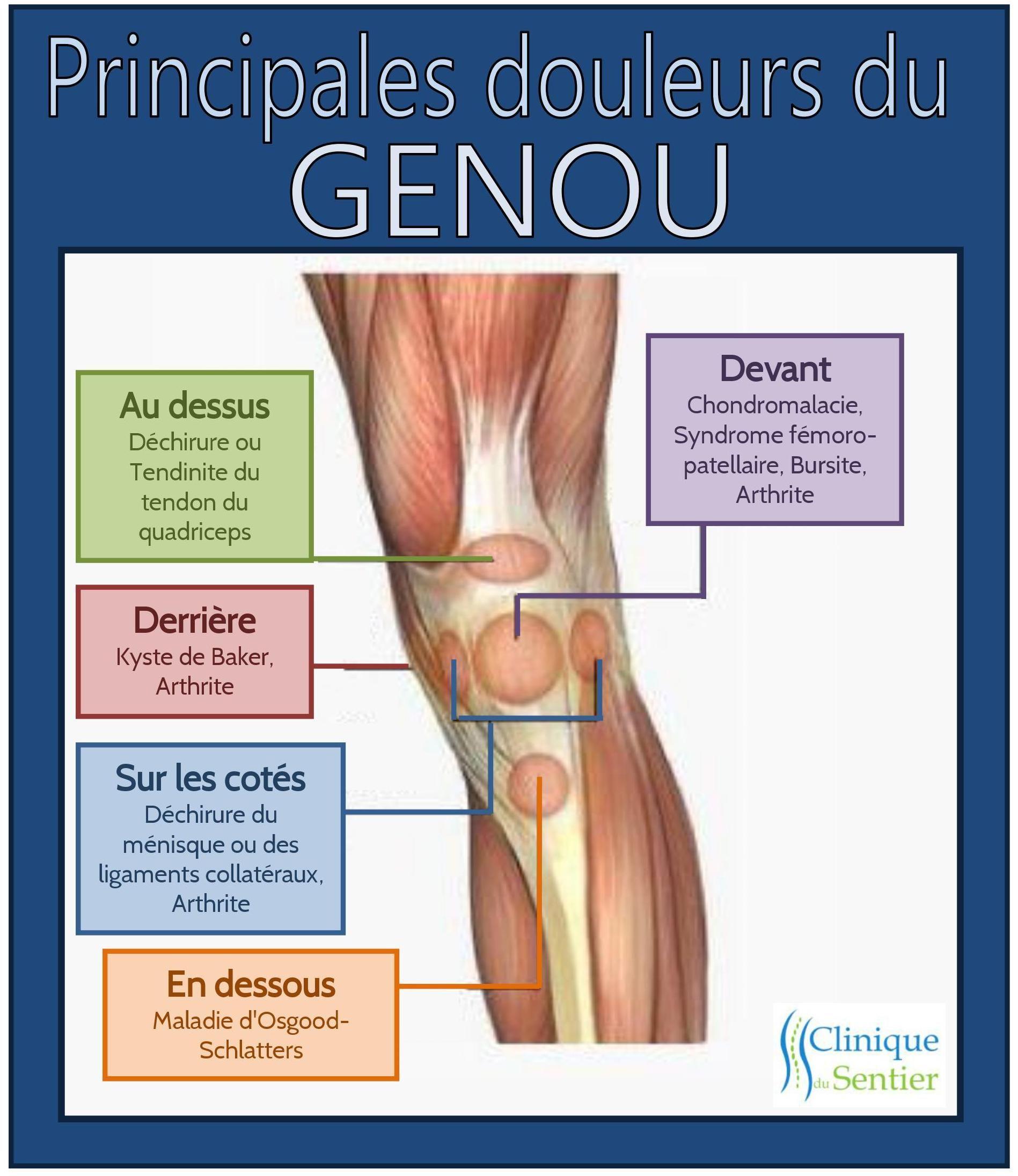 le genou est essentiel 224 notre mobilit 233 et 224 notre stabilit 233 durant certains mouvements comme