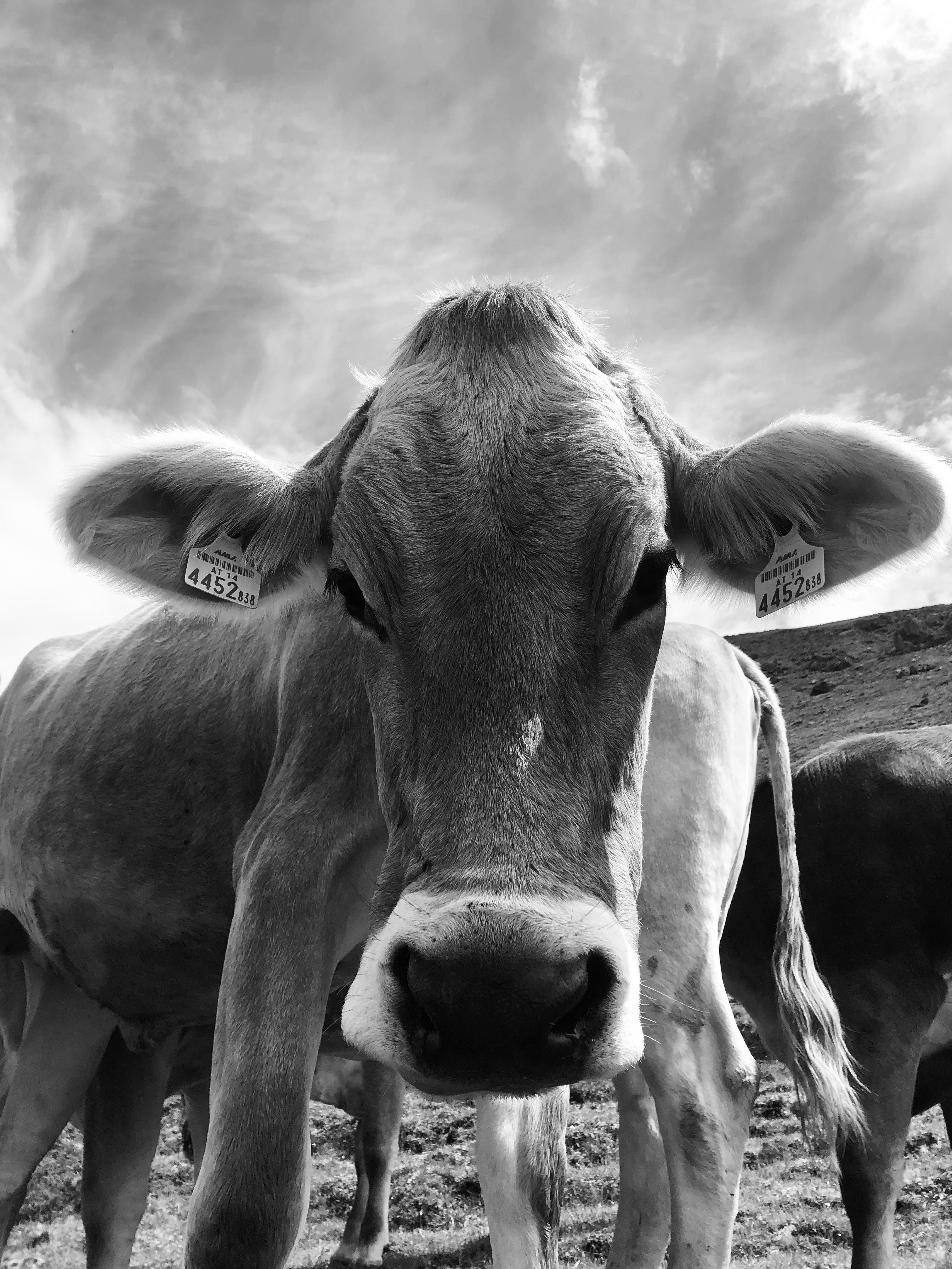 Pin Von Gina Steube Auf Tiere Tiere