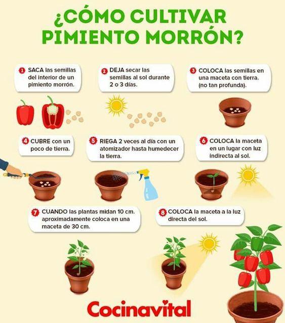 Eco Reciclaje Como Cultivar Pimientos En Maceta Vegetable Garden Diy Herb Garden Design Food Garden