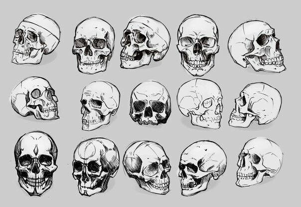 Different Positions Of Skull Skeleton Drawings Skull Reference Skeleton Head Drawing