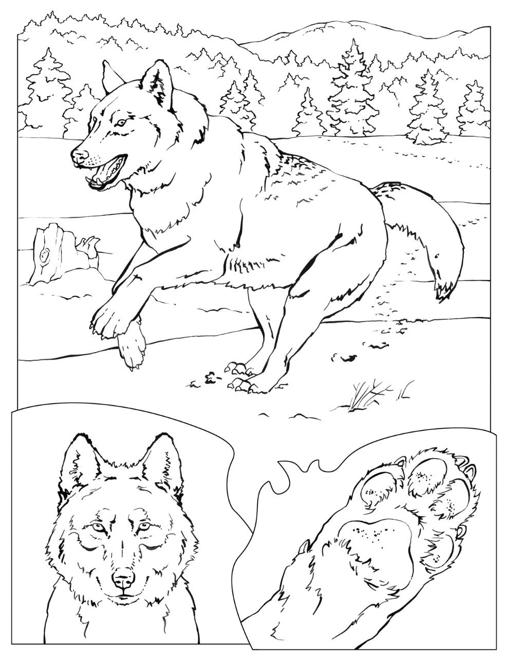 Coloring Book Animals A To I Coloring Pages Nature Coloring Books Horse Coloring Pages