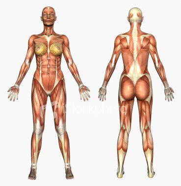 Under the skin. | Women with ABS | Pinterest | Menschliche Anatomie ...
