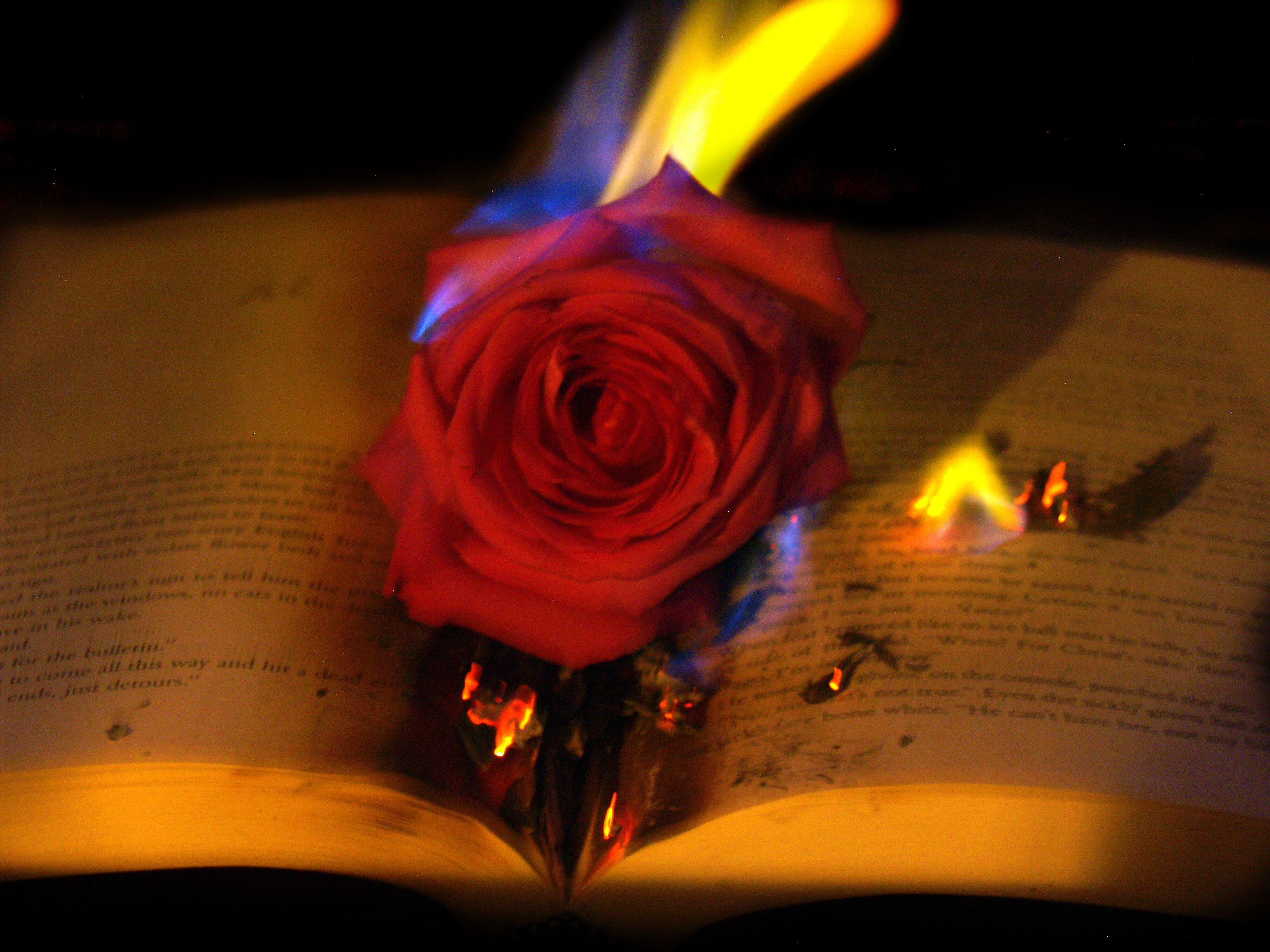 Floral Book Fire Photography Fire Photography Photoshop Photography Burning Flowers