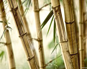 bamboo nature background powerpoint backgrounds pinterest