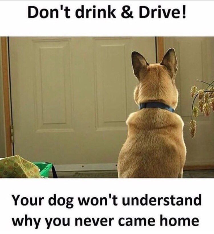 Don T Drink And Drive Your Dog Is Home Waiting For You And If