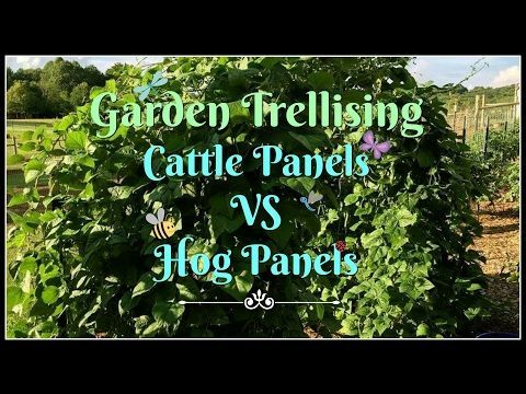 Garden TrellisingCattle Panels VS Hog Panels  YouTube #shadecontainergardenideas
