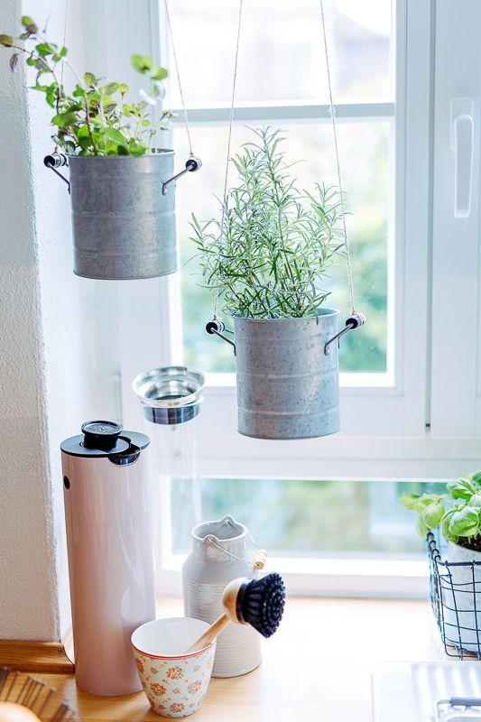 Neues Jahr ..... frische Kräuter für die Küche und Ingwertee ...