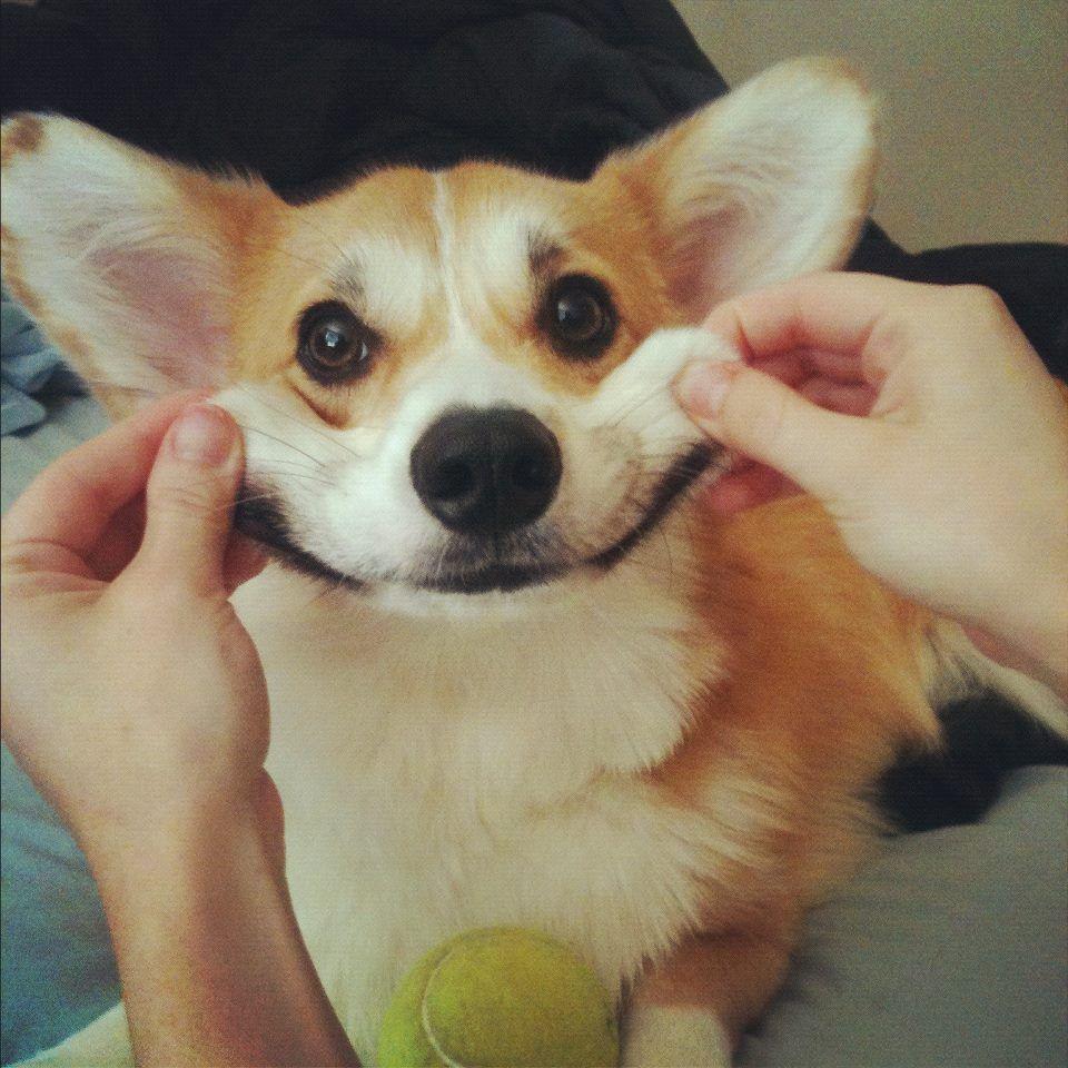 Random Dumb Dog Treat