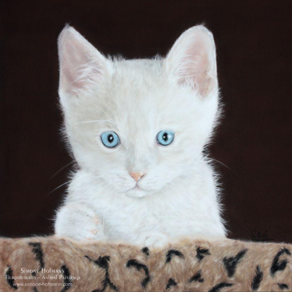 Tierportrait weiße Katze (Kitten), Pastellkreide auf Velour - Katzenportrait von Tiermalerin Simone Hofmann - www.simone-hofmann.com - Auftragsarbeit nach Fotovorlage. Painting of a white kitten, 30 x 30 cm.