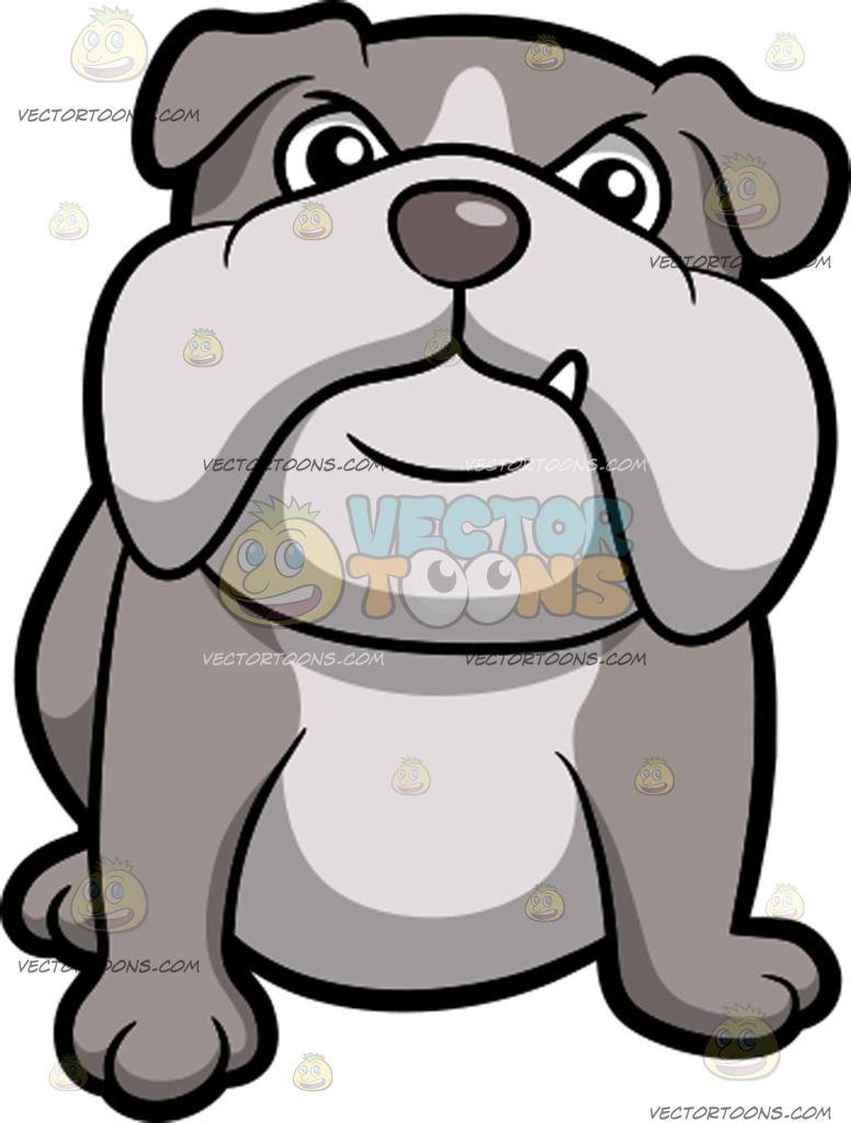 A Tough English Bulldog Sitting Down English Bulldog