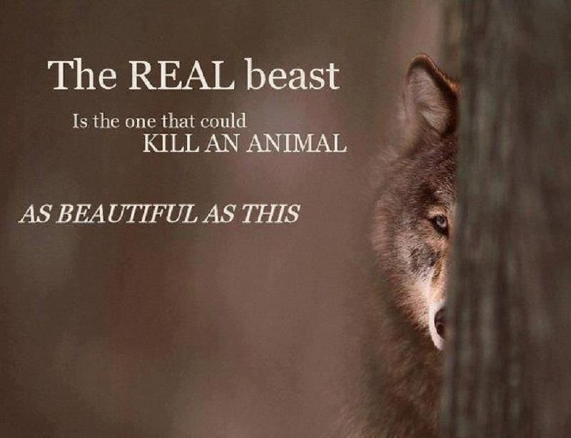 Where is the real beast?