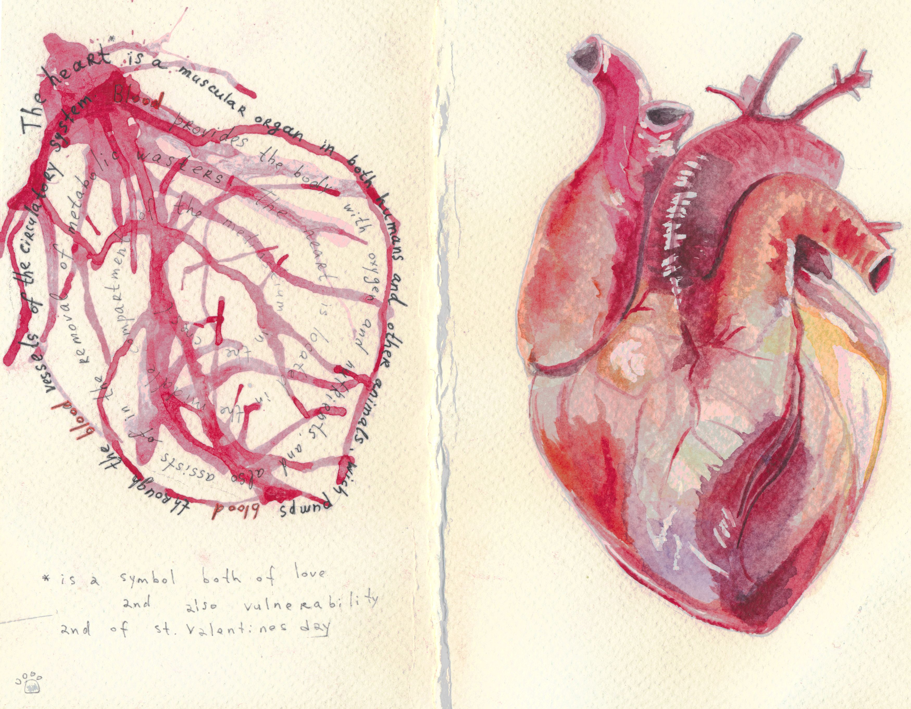 heart, stValentine, postcard, anathomy, anatomia, cuore, blood, real