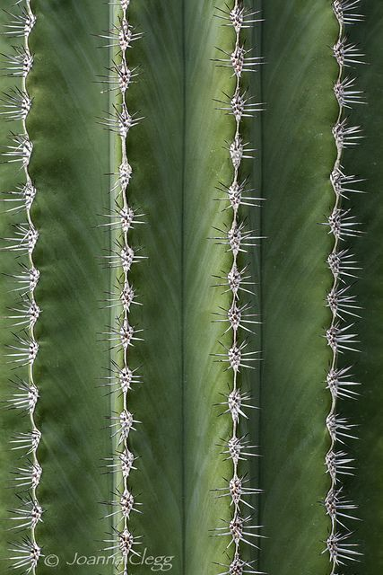 Libutron Prickly Lines C Joanna Clegg Abstract Macro Of A
