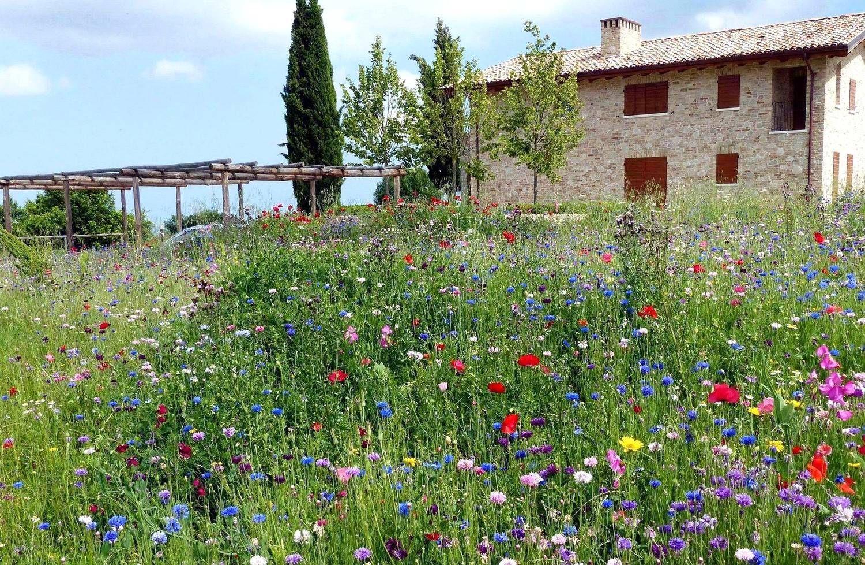 Rustic Garden by Lucio Piunti