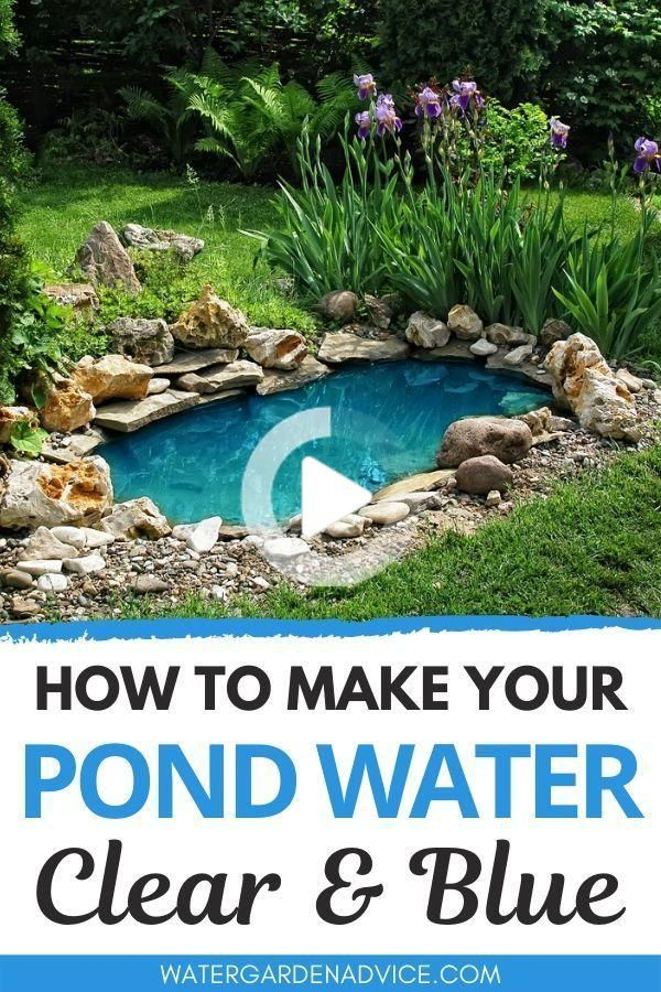 How To Make Your Pond Water Clear Blue in 2020 | Pond ...
