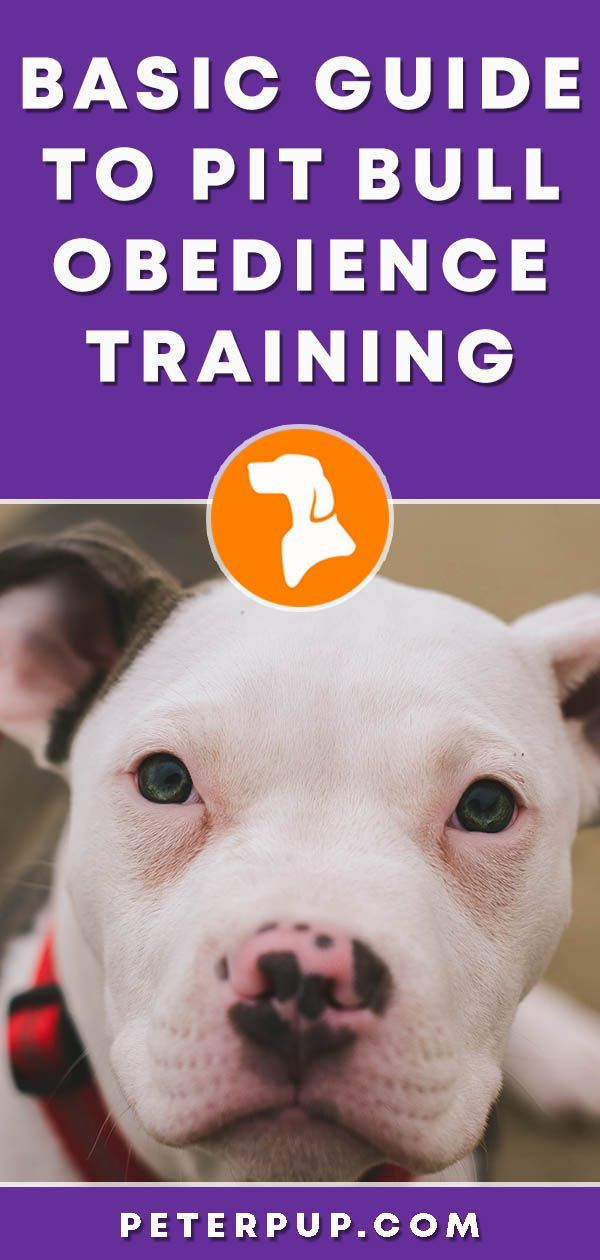 Pit Bull Obedience Training Learn The Wait Command Our Pets