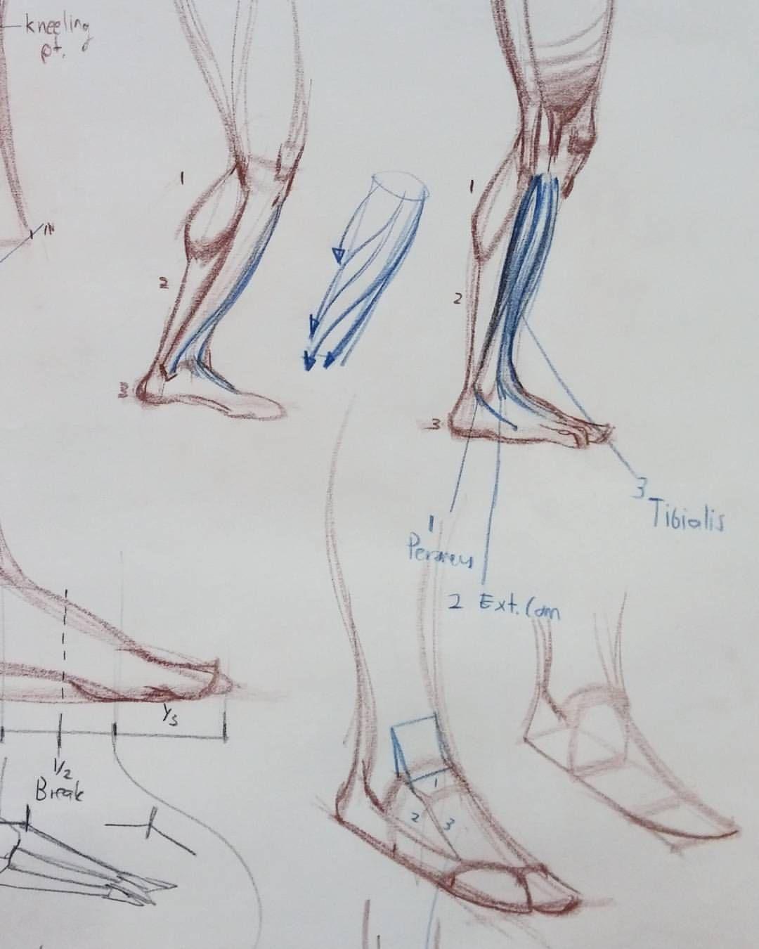 Legz #art #figure #drawing #anatomy #anatomydrawing #sketching ...