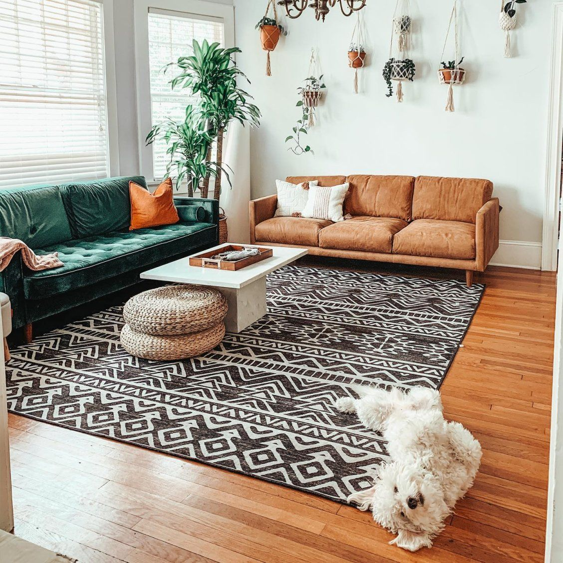 Our New Leather Couch Finally Came In And Waffle Is Pulling All The Tricks To Get Some Attention Black Rug Living Room Rugs In Living Room Boho Living Room Living room accent rugs