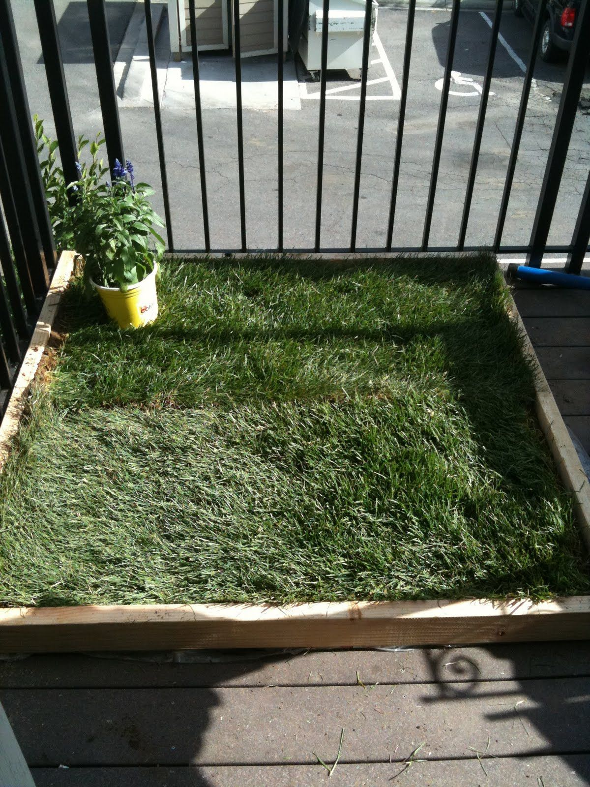 DIY dog potty patch for patio. I might do this so I don't ...