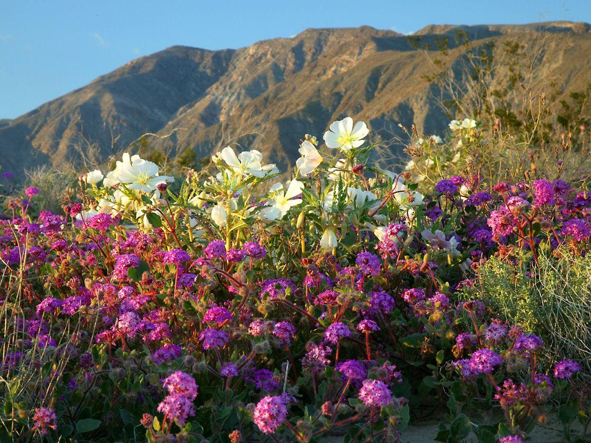 Springtime With Images Desert Flowers Secret Life Of Plants