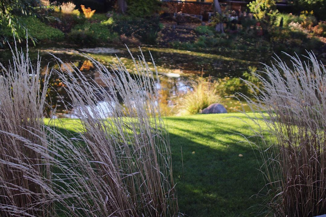 Herbst Herbstimgarten Gartenteich Garten Gartengestaltung Gartenliebe Garden Tuin Have Tradgard Sad Prud Prudvsadu Garten Garden Outdoor