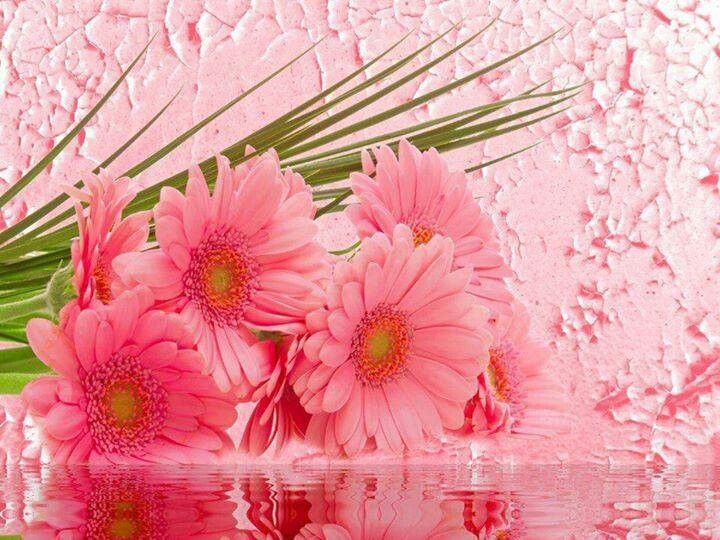 Pretty Pink Sunflowers Flower Bouquet Pictures Flower Wallpaper Beautiful Flowers Pictures