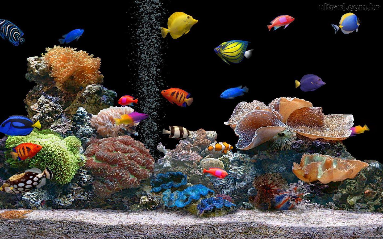 papel de parede para pc aquario em movimento