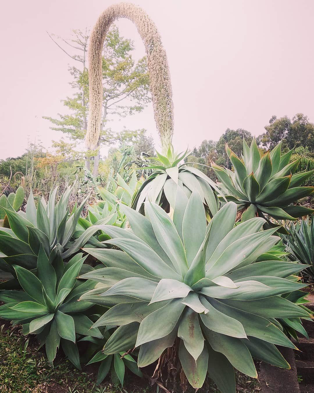 Ile Reunion Arbre Tree Forest Foret Plante Plantesucculente