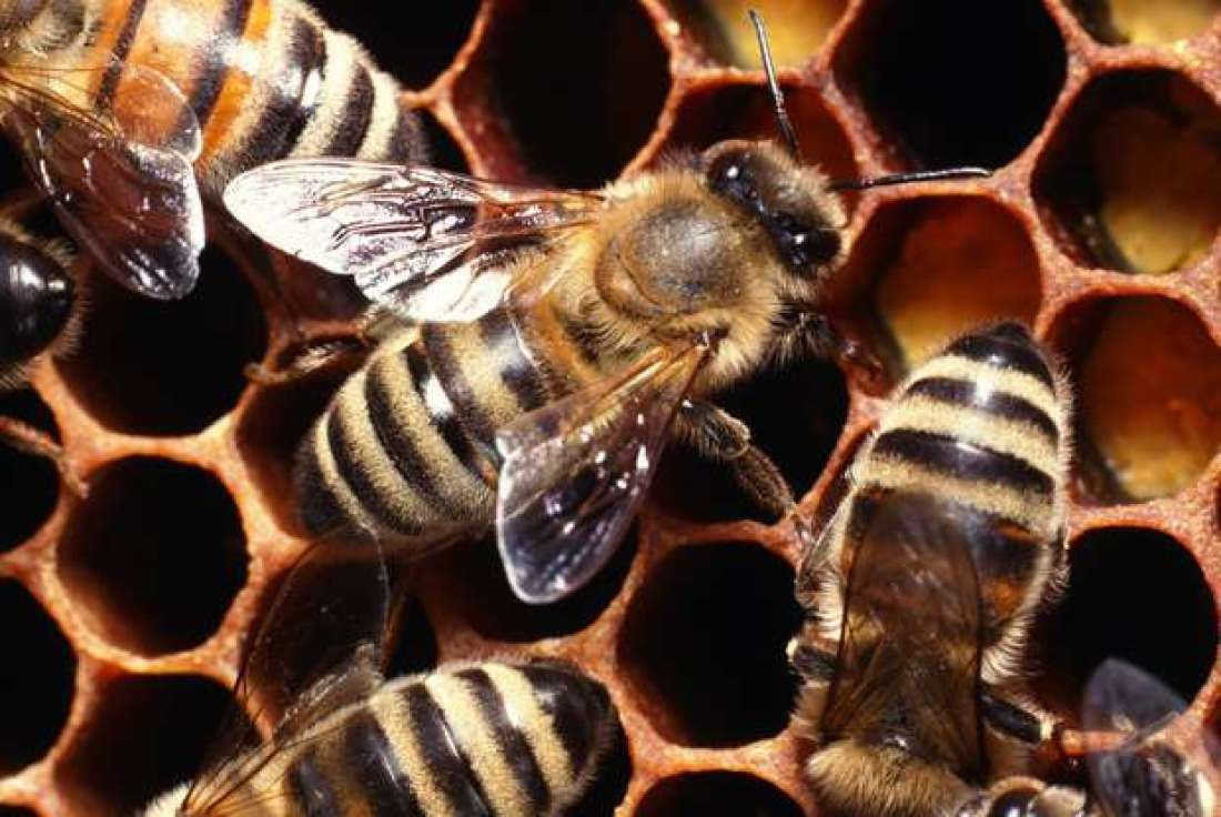 how to get rid of honey bees without killing them minecraft
