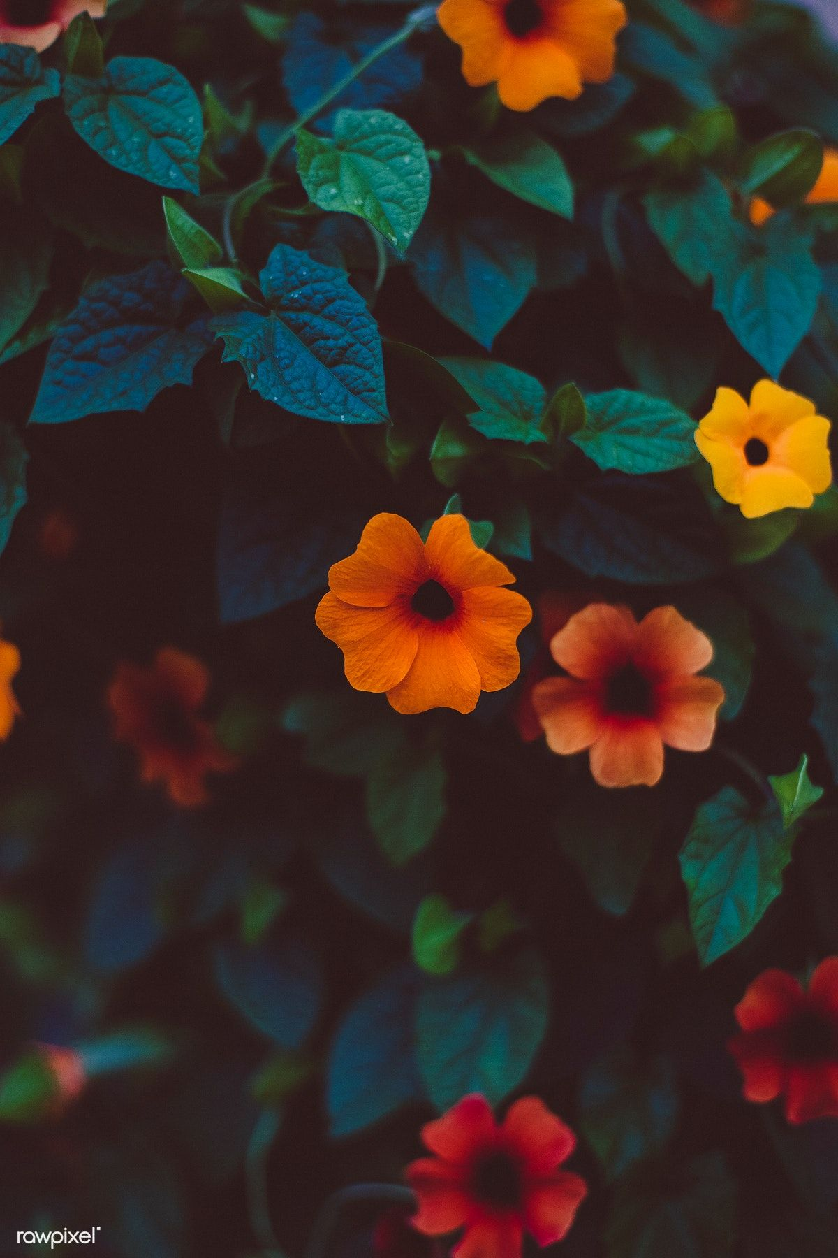 Colorful Flowers On A Bush Free Image By Rawpixel Com Markus Spiske Flowers Photography Wallpaper Photography Wallpaper Beauty Iphone Wallpaper