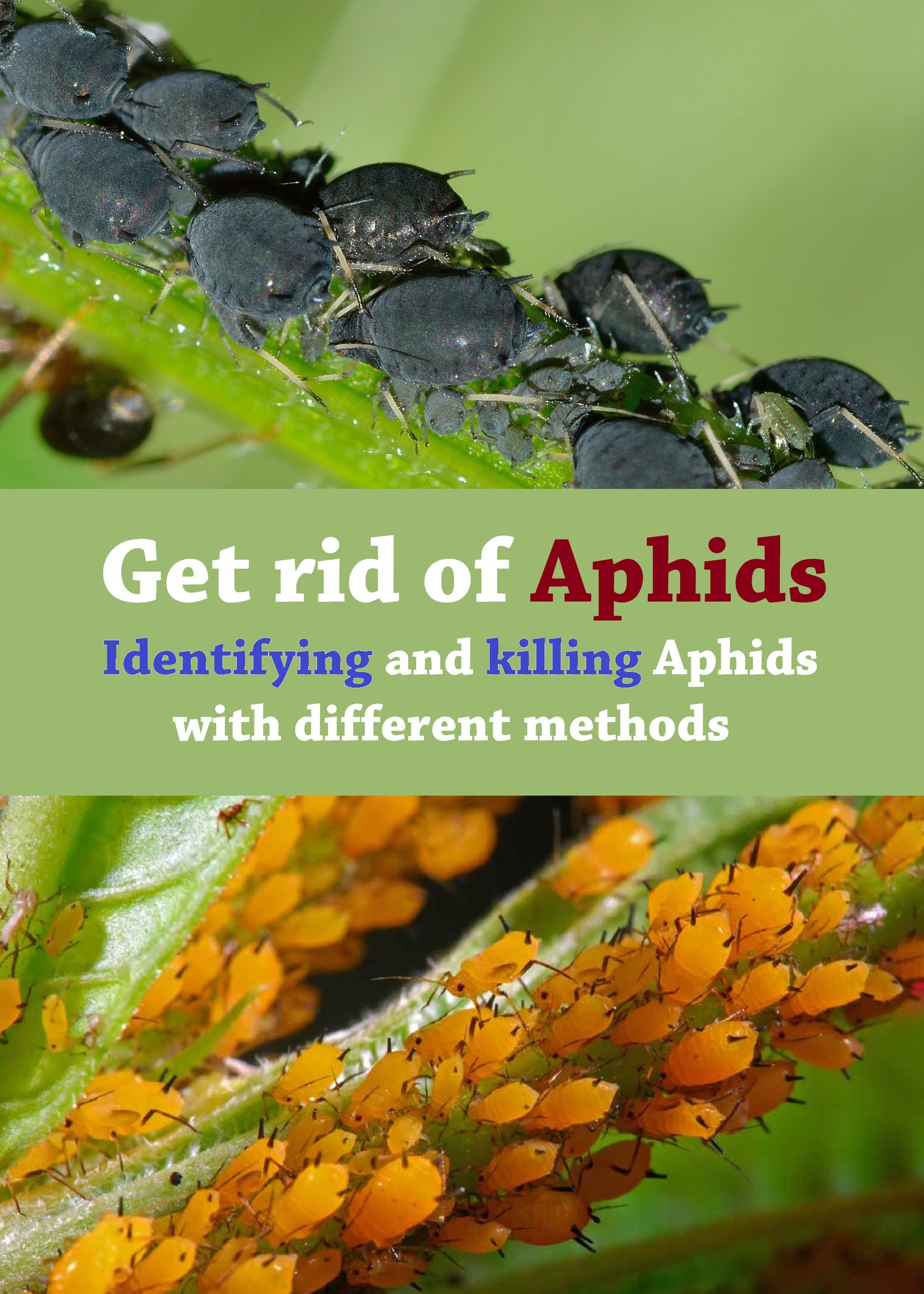 Pin On Pests And Diseases