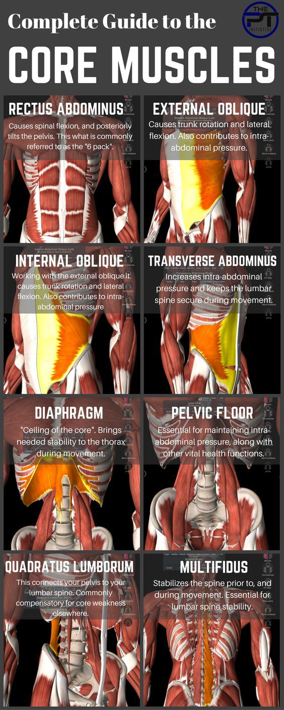 What the Core Muscles Are | Health and fitness | Pinterest | Rectus ...