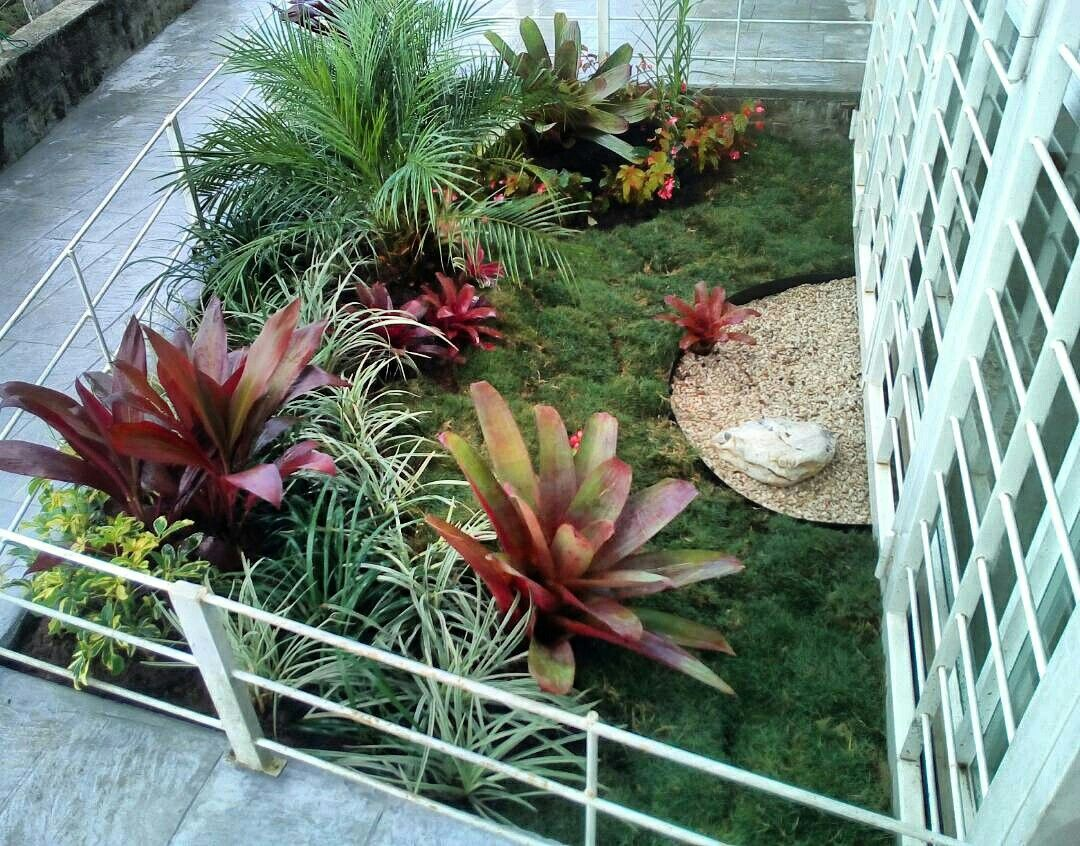 Pequeno Jardin Con Bromelias Palma Fenix Grama Japonesa