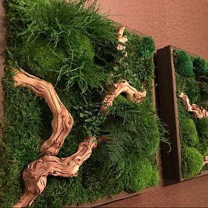 """Photo of Pflanze Painting®-keine Pflege-grüne Wand-Kunst. Echte konservierte Pflanzen. 18 """"x 18"""" Moos und Farn-Kunst."""