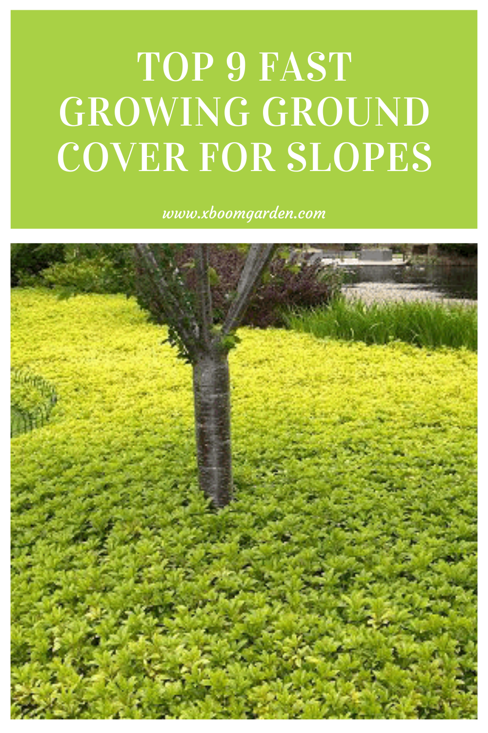 Top 9 Fast Growing Ground Cover For Slopes Ground Cover Ground Cover Plants Evergreen Plants