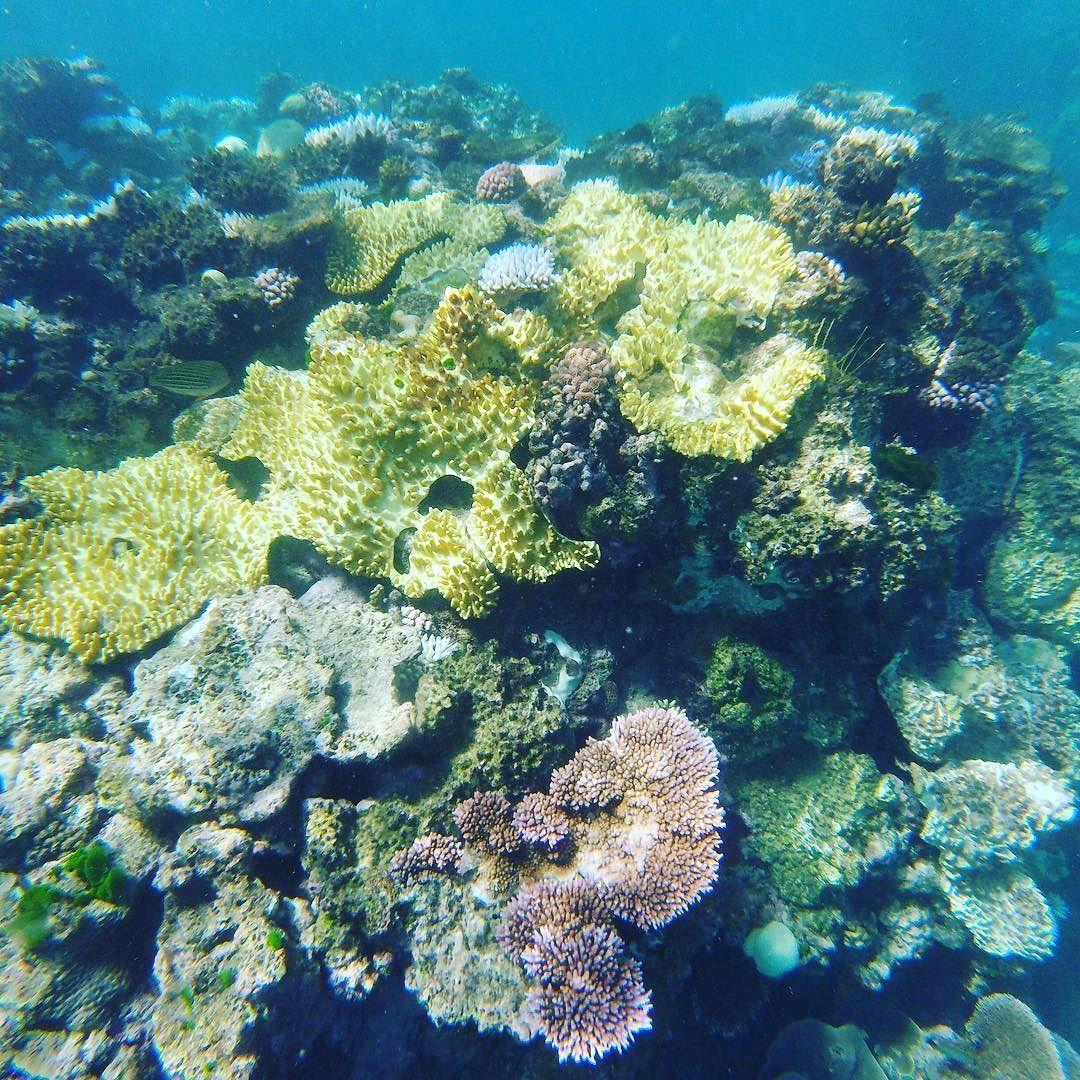 Great Barrier Reef  #greatbarrierreef #incredible #stunning #cairns #queensland #snorkelling #bestday #coral #colours #ocean by lauratet http://ift.tt/1UokkV2