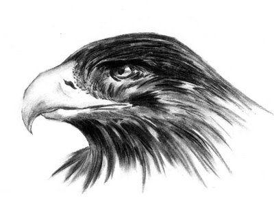 desenho  aguia