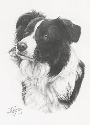 Border Collie Tekening Border Collie Art Collie Dog Dog