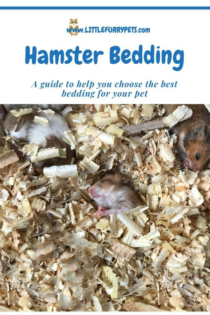 Best Hamster Bedding All you need to know (With images