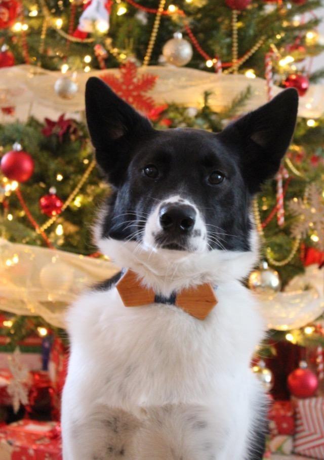 my dog\u0027s first christmas #Cute Cute Things aww Pinterest Dog