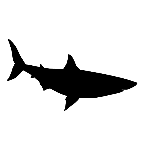 Pin By My Preschool Diary On K1 Art Animal Silhouette Stencil Street Art Shark Silhouette