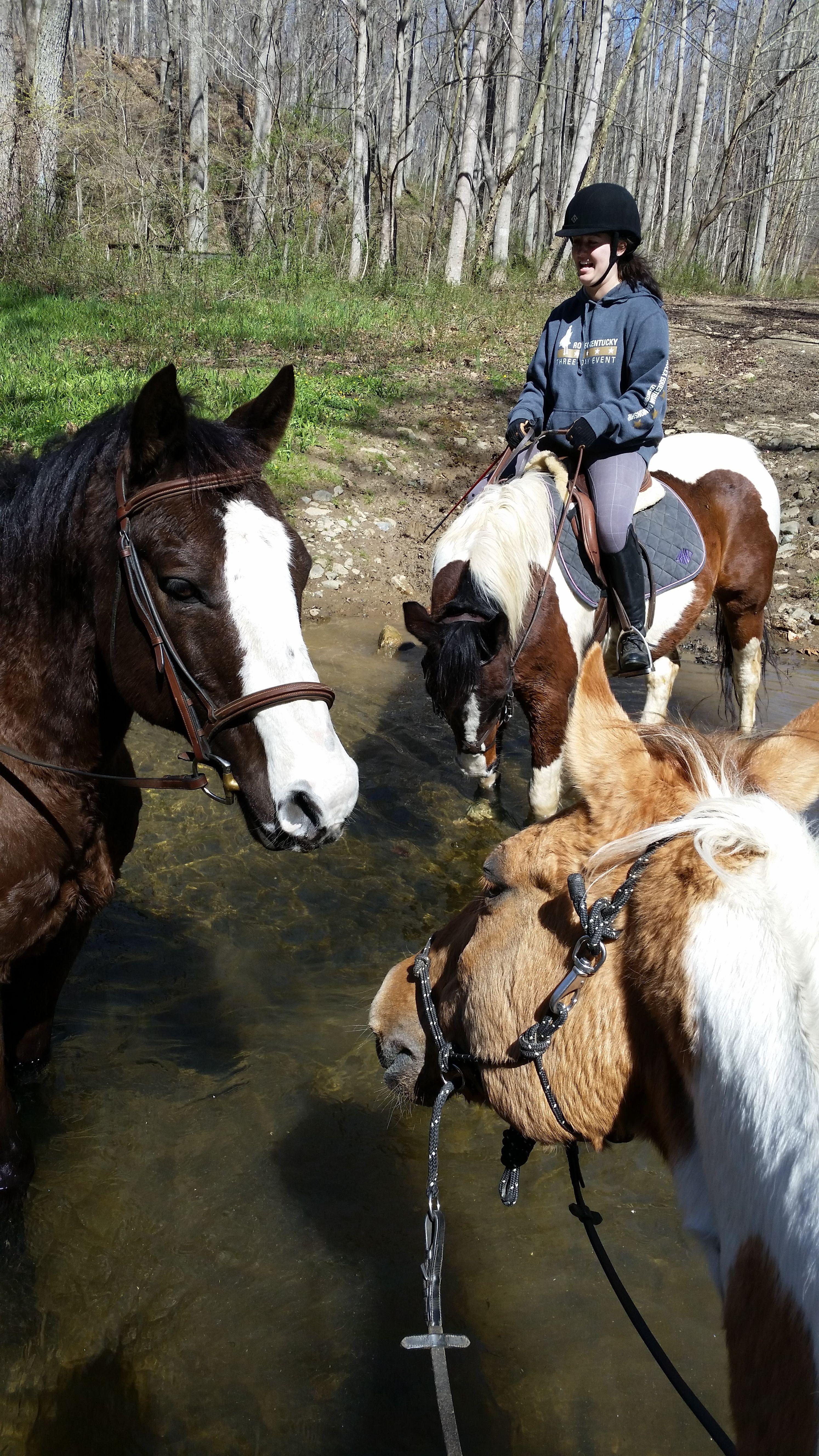 World Mental Health Day and Horses Horses, Horse